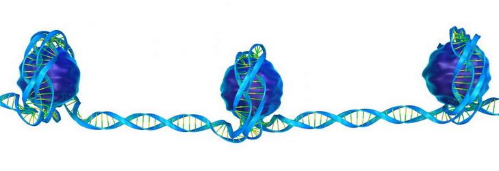 La alteración de la estructura del ADN en las células madre parece que reactiva el gen de la Frataxina