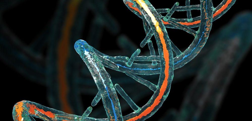 El gen de la Frataxina necesario para la estabilidad del genoma en células de la ataxia de Friedreich