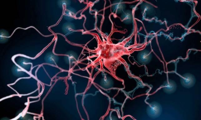 El papel de los astrocitos en los déficits cerebelares en la deficiencia de frataxina