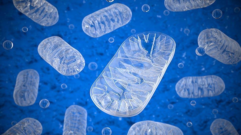 Potenciales medicamentos identificados ofrecen esperanza para pacientes con ataxia de Friedreich y enfermedades mitocondriales