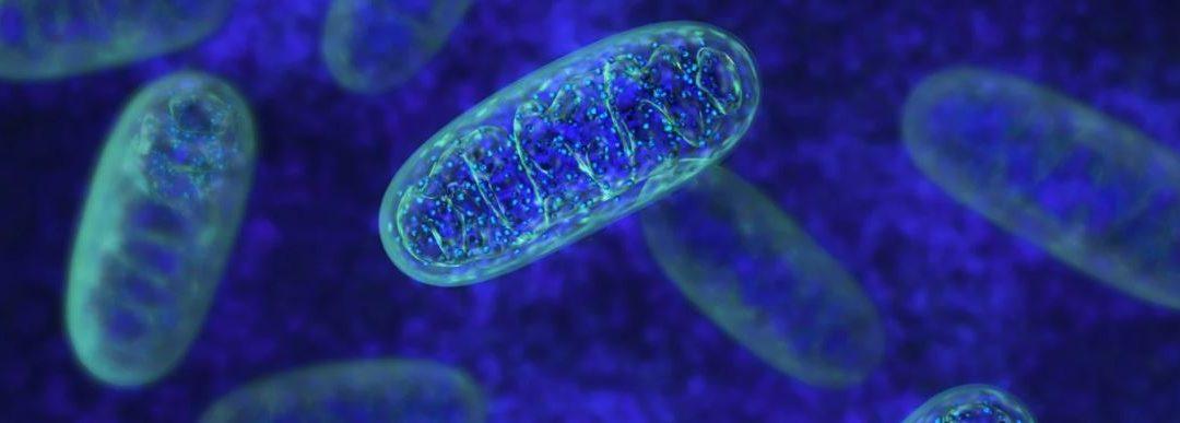 El péptido sintético SS-31 podría usarse para tratar la ataxia de Friedreich