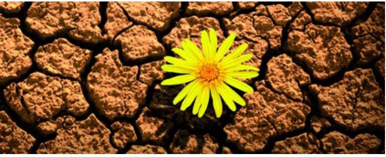 Resiliencia | La adversidad no la podemos elegir, pero sí la actitud con que la afrontamos.