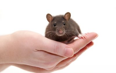 Los síntomas de la ataxia de Friedreich se pueden revertir en gran parte en un nuevo modelo de ratón