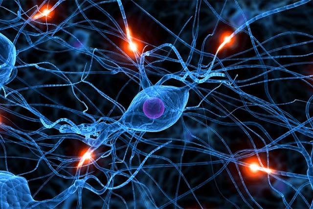 Científicos suizos observan por primera vez nacimiento de neuronas