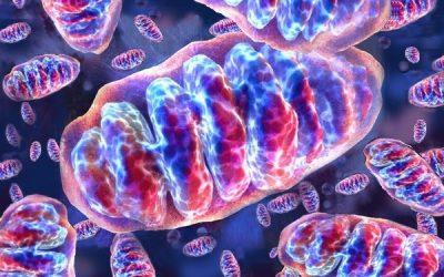 Los análogos de azul de metileno mejoraron la función mitocondrial y aumentaron los niveles de frataxina