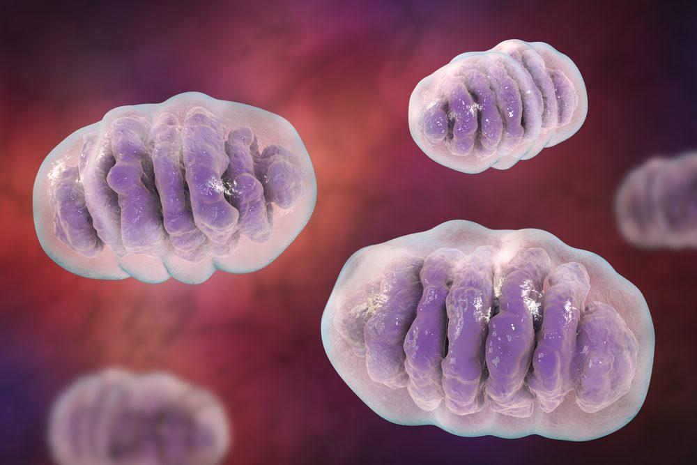 Los antioxidantes aumentan los niveles de frataxina en las células de ataxia de Friedreich
