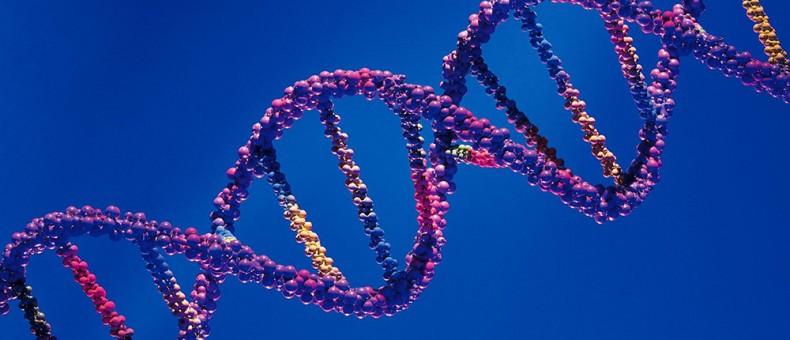Nuevo mecanismo molecular puede revertir el defecto genético responsable de la ataxia de Friedreich