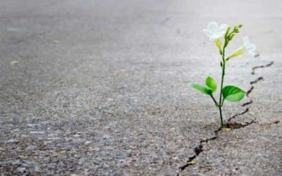 Resiliencia atáxica
