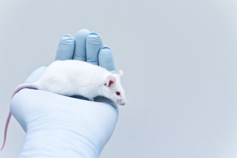 revertir la ataxia en ratones SCA1